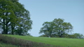 Field With Large Trees In Windy Rural Landscape 50441436