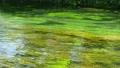 エコロジーイメージ 50458620