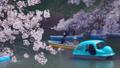 水辺に咲く満開の桜の花 50459345
