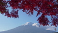 Autumn leaves and Mount Fuji seen from Lake Kawaguchi (timelapse) 50459780