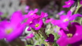 Viola flower field. 50461447