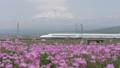 후지산을 통과하는 신칸센과 만개 한 자운영 草畑 (빵) 50488434