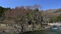 春の高時川 50497802