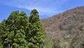 風に揺れる木々 50497804