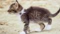 Homeless cute kitten outside. Adorable street little cat playing outdoors. Stray kitty walking 50509407