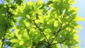 年輕的葉子季節綠色在微風中搖曳 50539539