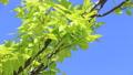新鮮的綠色藍天輕風 50539563