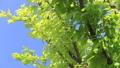 新鮮的綠色藍天輕風 50539564