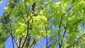 新鮮的綠色藍天輕風 50539565