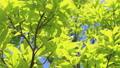 新鮮的綠色藍天輕風 50539566
