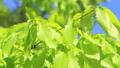 新鮮的綠色藍天輕風 50539567