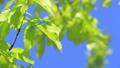 新鮮的綠色藍天輕風 50539568