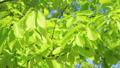 新鮮的綠色藍天輕風 50539569
