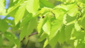 新鮮的綠色藍天輕風 50539570