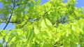新鮮的綠色藍天輕風 50539584