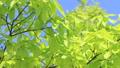 新鮮的綠色藍天輕風 50539585