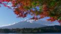 河口湖より望む紅葉と富士山(タイムラプス・チルトアップ) 50543807