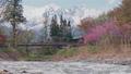 長野縣白馬村的吊橋 50559715