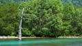 คามิคาว่าคามิโคจิสีเขียวสด 50571055
