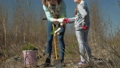 Planting tree saplings. Forest restoration, protection of ecology. 50582923