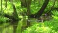 森林To小牧北海道的流動 50604078
