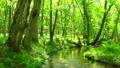 綠色的森林和流動To小牧北海道 50604079