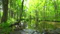 流動在Tomakomai北海道森林 50604080
