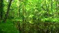 流動反映綠色Tomakomai北海道 50604081