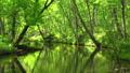 深林流Tomakomai北海道 50604082