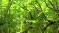 在Tomakomai北海道森林覆蓋的流動 50604083