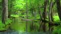 在Tomakomai北海道森林中安靜的流動 50604087