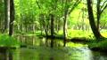 森林和平靜的流動Tomakomai北海道 50604088