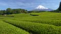 富士和新茶茶園,台場,富士市,靜岡縣 50618635
