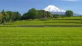 富士和新茶茶園,台場,富士市,靜岡縣 50618636