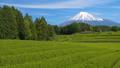 富士和新茶茶園,台場,富士市,靜岡縣 50618646