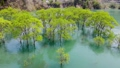 白川湖の水没林 空撮 山形飯豊 50620036