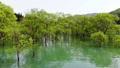 白川湖の水没林 空撮 山形飯豊 50620037