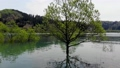 白川湖の水没林 空撮 山形飯豊 50620038