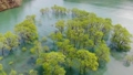 白川湖の水没林 空撮 山形飯豊 50620040