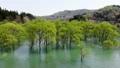 白川湖の水没林 空撮 山形飯豊 50620041
