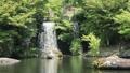 新緑の渓石園(音あり) 50656305