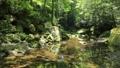 新緑の耶馬溪 50656311