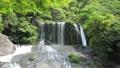 新緑の竜門の滝(音あり)4 50656314
