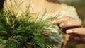 Girl holding a pine branch Closeup. 50662756