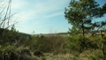 View of the pine forest and the anthill. The concept of respect for nature. 50663413