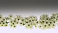 ดอกไม้หิมะวิลโลว์ดอลลี่ในแนวตั้ง 50714026