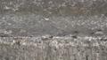 고요한 농촌 마을앞 다리위 아침부터 분주한 개미들 50723248