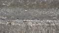 고요한 농촌 마을앞 다리위 아침부터 분주한 개미들 50723250