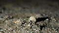 night, close-up, a small hermit crab crawling in the sand. 50739145
