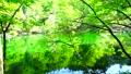 新緑の龍ヶ窪 新緑の龍ヶ窪 FIX 50754610